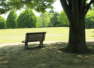 大木と公園のベンチの写真素材 [FYI04774008]