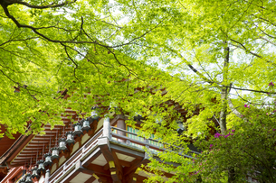 新緑の談山神社の写真素材 [FYI04774020]
