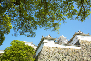 新生姫路城の写真素材 [FYI04774036]