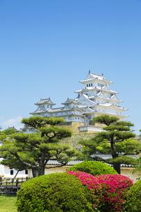 新緑の新生姫路城の写真素材 [FYI04774048]