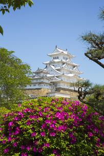 新緑の新生姫路城の写真素材 [FYI04774049]