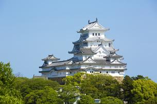 新緑の新生姫路城の写真素材 [FYI04774053]