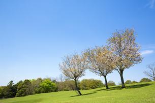新緑の奈良飛火野の写真素材 [FYI04774056]