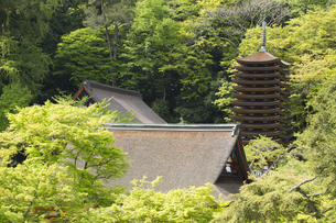 新緑の談山神社全景の写真素材 [FYI04774079]
