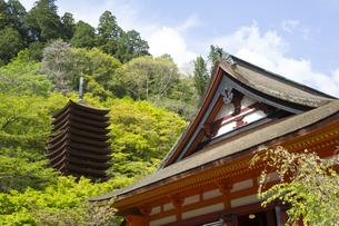 新緑の談山神社の写真素材 [FYI04774081]