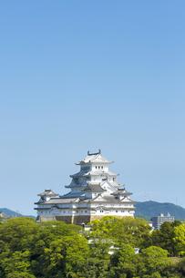 新緑の新生姫路城の写真素材 [FYI04774119]