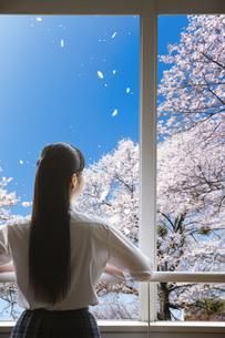 教室の窓から桜を眺める女子高生の写真素材 [FYI04774168]