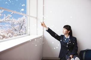 桜の花びらに手を伸ばす女子高生の写真素材 [FYI04774173]