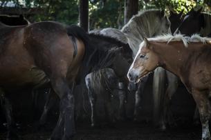馬が佇む朝の牧場の厩舎の風景の写真素材 [FYI04774263]