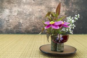 和風に活けたシュウメイギクとミントの花の写真素材 [FYI04774272]