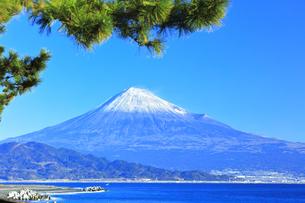 三保の松原より冠雪の富士山の写真素材 [FYI04774852]