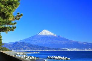 三保の松原より冠雪の富士山の写真素材 [FYI04774853]