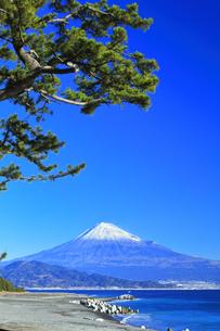 三保の松原より冠雪の富士山の写真素材 [FYI04774854]