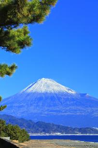 三保の松原より冠雪の富士山の写真素材 [FYI04774855]