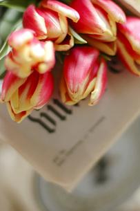 チューリップの花束の写真素材 [FYI04774867]