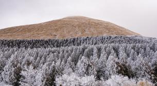 阿蘇 杵島岳と樹氷の写真素材 [FYI04775388]