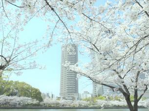 桜とビルの写真素材 [FYI04775490]