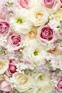 バラとトルコキキョウのアレンジメントの写真素材 [FYI04775660]