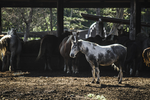 馬が佇む朝の牧場の厩舎の風景の写真素材 [FYI04775812]