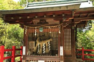 京都の八大神社 一乗谷下り松の決闘で名高い八大神社 宮本武蔵開悟の地の写真素材 [FYI04775822]