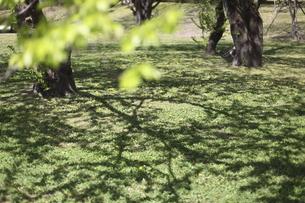 新緑の公園の写真素材 [FYI04775845]