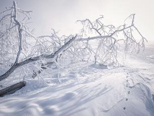 霧氷の写真素材 [FYI04776128]