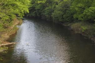 森の小川の写真素材 [FYI04776265]