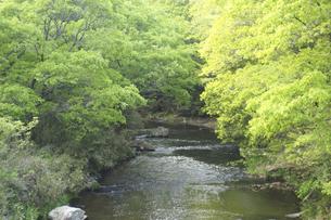 森の小川の写真素材 [FYI04776266]