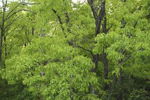 新緑の森の写真素材 [FYI04776268]