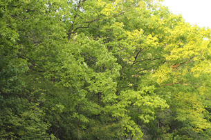 新緑の森の写真素材 [FYI04776269]