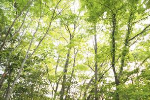 新緑の森の写真素材 [FYI04776270]