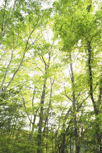 新緑の森の写真素材 [FYI04776274]