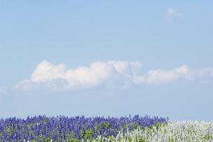 花畑と青空の写真素材 [FYI04776328]