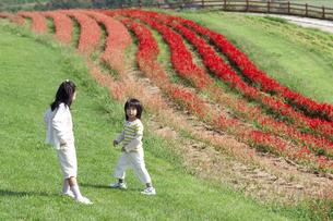 花畑で遊ぶ女の子と男の子の写真素材 [FYI04776558]