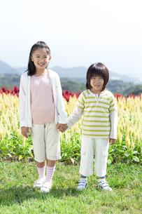 花畑で手をつなぐ女の子と男の子の写真素材 [FYI04776560]