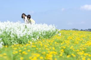 花畑で遊ぶ女の子と男の子の写真素材 [FYI04776592]