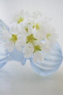 サクラソウと青色のガラス瓶の写真素材 [FYI04776613]