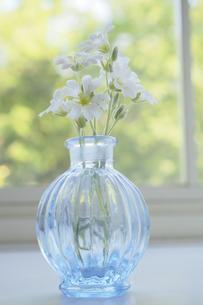 サクラソウと青色のガラス瓶の写真素材 [FYI04776618]