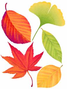 紅葉した落ち葉のイラスト素材 [FYI04776696]
