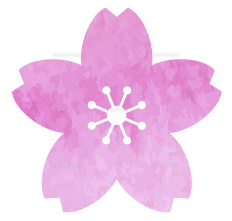 桜の花のアイコン 水彩テクスチャによる素材のイラスト素材 [FYI04776997]