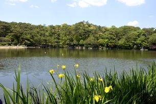 神戸,再度公演,新緑の修法ヶ原池の写真素材 [FYI04777275]