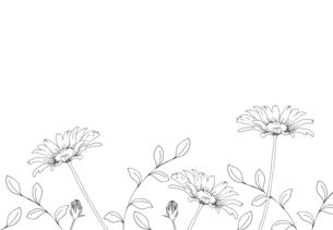 デイジーの花 手描き線画イラストのイラスト素材 [FYI04777409]