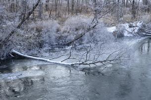 北海道 阿寒郡阿寒町の樹氷と気嵐の写真素材 [FYI04777512]