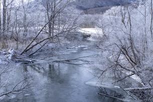 北海道 阿寒郡阿寒町の樹氷と気嵐の写真素材 [FYI04777514]