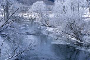 北海道 阿寒郡阿寒町の樹氷と気嵐の写真素材 [FYI04777515]