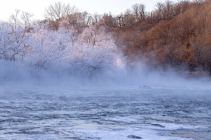 北海道 阿寒郡阿寒町の樹氷と気嵐の写真素材 [FYI04777517]