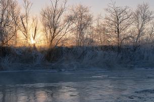 北海道 阿寒郡阿寒町の樹氷と気嵐の写真素材 [FYI04777518]