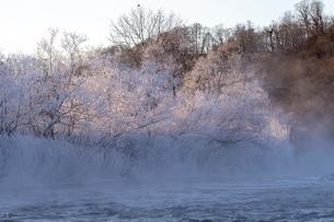 北海道 阿寒郡阿寒町の樹氷と気嵐の写真素材 [FYI04777519]