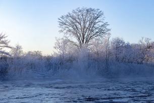 北海道 阿寒郡阿寒町の樹氷と気嵐の写真素材 [FYI04777521]
