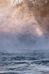 北海道 阿寒郡阿寒町の樹氷と気嵐の写真素材 [FYI04777523]